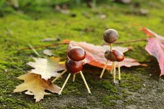 Chestnuts animals Stock Images