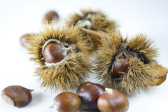 Chestnuts in autumn 1 Stock Image