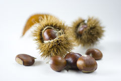 Chestnuts in autumn 2 Royalty Free Stock Photo