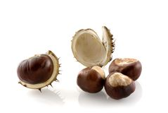 Chestnuts in autumn. Chestnuts with husk in autumn Stock Photos