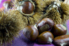 Chestnuts in autumn 6 Stock Image