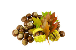 Chestnuts autumn composition and sear leaves Royalty Free Stock Photos