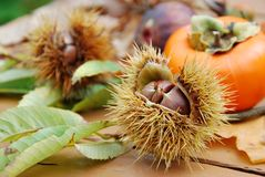 Chestnuts and autumn fruits Stock Photo
