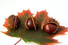 Chestnuts and autumn leaf Royalty Free Stock Images