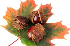 Chestnuts and autumn leaf Royalty Free Stock Photo