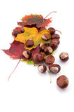 Chestnuts and autumn leafs on white background Royalty Free Stock Photos