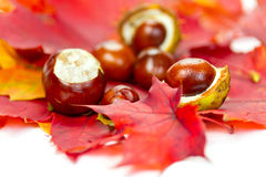 Chestnuts on autumn leaves Royalty Free Stock Photos