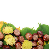 Chestnuts on autumn leaves Stock Images