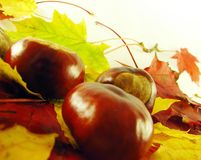 Chestnuts on autumn leaves Stock Photo