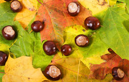 Chestnuts and autumn leaves Royalty Free Stock Images