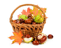 Chestnuts with autumn leaves in a basket Stock Image