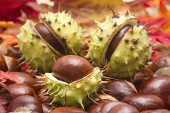Chestnuts and autumn leaves Stock Images