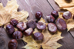 Chestnuts and autumn leaves on a old wooden table Royalty Free Stock Image
