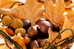 Chestnuts and autumn leaves Stock Photo