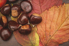 Chestnuts and autumn leaves Royalty Free Stock Image