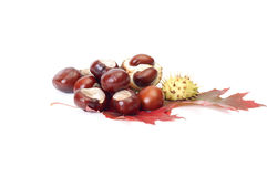 Chestnuts and autumn leaves on a white. Stock Images
