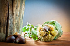 Chestnuts in autumnal atmosphere Stock Photography