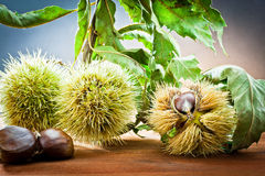 Chestnuts in autumnal atmosphere Stock Images