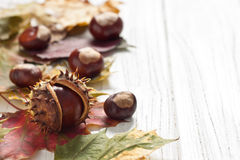 Chestnuts. Autumnal decoration of chestnuts and leaves Royalty Free Stock Photography