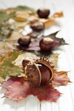 Chestnuts. Autumnal decoration of chestnuts and leaves Stock Image