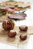 Chestnuts. Autumnal decoration of chestnuts and leaves Stock Images