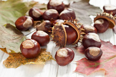 Chestnuts. Autumnal decoration of chestnuts and leaves Royalty Free Stock Images