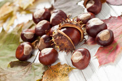 Chestnuts. Autumnal decoration of chestnuts and leaves Royalty Free Stock Photo