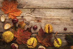 Chestnuts and autumnal maple leaves on the wooden background with film filter effect Royalty Free Stock Photo