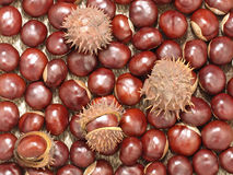 Chestnuts.Background. Foto de archivo libre de regalías
