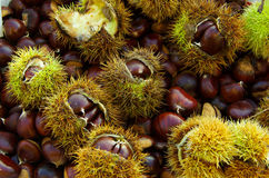 Chestnuts background Stock Photo