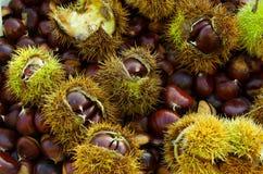 Chestnuts background Stock Photo