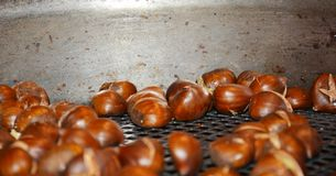 Chestnuts, background Royalty Free Stock Photos