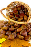 Chestnuts in basket. A basket full of edible sweet chestnuts Stock Photos