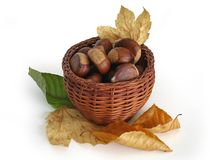 Chestnuts in a basket with autumn leaves. Basket full of chestnuts (Castanea sativa) and some autumn leaves Royalty Free Stock Photo