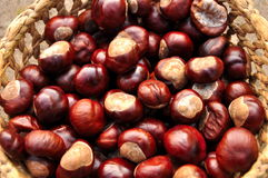 Chestnuts in the basket. Close up of chestnuts in the basket Royalty Free Stock Images