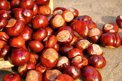 Chestnuts in the basket. Close up of chestnuts in the basket Stock Photography