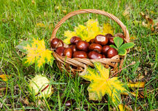 Chestnuts in a basket Royalty Free Stock Photos