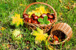 Chestnuts in a basket Royalty Free Stock Photography