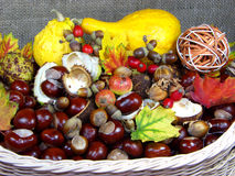 Chestnuts Basket. Chestnuts, pupkins,  and autumn fruits in the basket Stock Photo