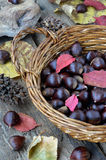 Chestnuts in a basket sitting Stock Images