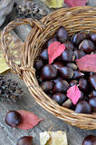 Chestnuts in a basket sitting Royalty Free Stock Photography