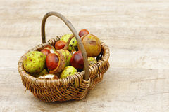 Chestnuts in the basket Royalty Free Stock Photography