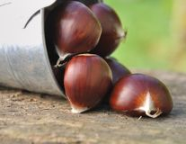 Chestnuts on board Stock Photo