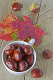 Chestnuts in a bowl. And scattered on the table with autumn leaves Royalty Free Stock Images