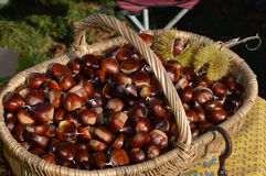 Chestnuts in a braided basket. On a table Royalty Free Stock Images