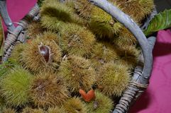 Chestnuts in a braided basket on a table. South of france Stock Photos