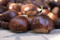 Chestnuts brown in autumn. Sweet chestnut browns are one of the symbols of the fall season Royalty Free Stock Photography
