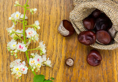 Chestnuts in burlap and flower on wood textured Stock Photo