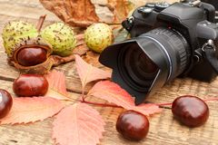 Chestnuts, camera and autumn yellow and red leaves. On wooden background stock images