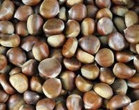 Chestnuts (Castanea sativa) Stock Images
